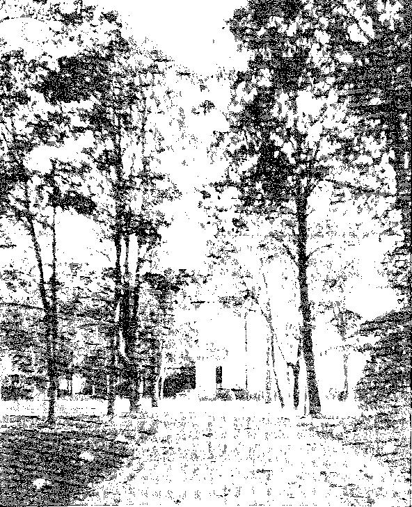 Biała Waka. Aleja wjazdowa, przed 1939 r.